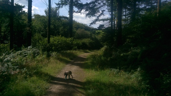 Florrie in forest